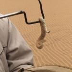 Sidewinders: Desert Survivors